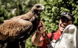 Adler und andere Greifvögel sind in Kirgistan weit verbreitet